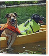 Dogs In A Kayak Wood Print
