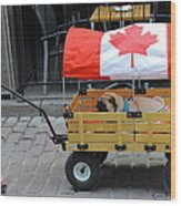 Dog's Life In Canada Wood Print