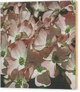 Dogwood 1 Wood Print