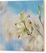 Dogwood Against Blue Sky Wood Print
