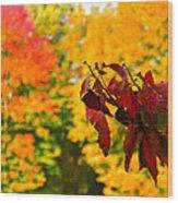 Dogwood And Fall Colors Wood Print