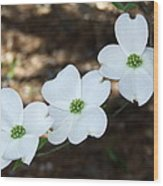 Dogwood Wood Print