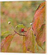 Dogwood Berrie Wood Print