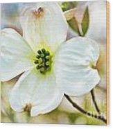 Dogwood Blossom - Digital Paint I  Wood Print