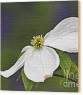 Dogwood Blossom - D001797 Wood Print