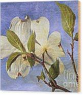 Dogwood Blossoms And Blue Sky - D007963-b Wood Print