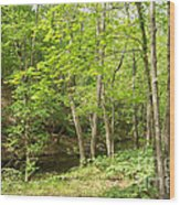 Dogwood Canyon Wood Print