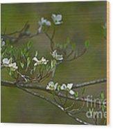 Dogwood I Wood Print