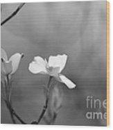 Dogwood IIi    Black And White Wood Print