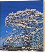 Dogwood In Bloom Wood Print