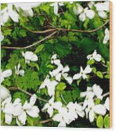 Dogwood In The Wind Wood Print