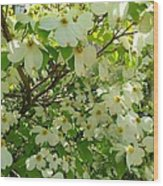 Dogwood Kissed By The Sun Wood Print