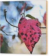 Dogwood Leaf - Red Leaf Falling With Watching Buds Wood Print