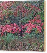 Dogwood Leaves In The Fall Wood Print