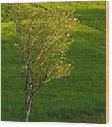 Dogwood Wood Print
