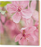Dogwood Tree Bloom Close Up In Spring Wood Print