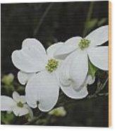 Dogwood Tree Blooms Wood Print