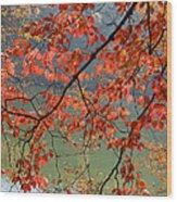 Dogwood Tree Wood Print