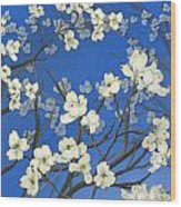 Dogwood Trees Wood Print