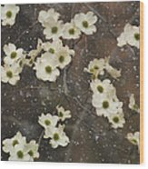 Dogwood Winter Wood Print