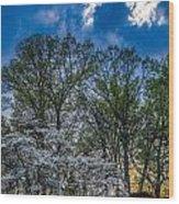 Dogwoods And Dramatic Sky Wood Print