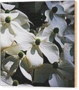 Dogwoods Caught In Central Park Wood Print