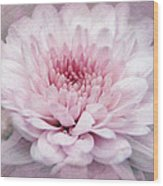 Dolled-up Dahlias Wood Print