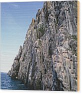 Dolomite Cliff With Guillemot Colony Wood Print