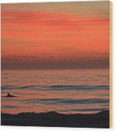 Dolphin At Cape Hatteras Wood Print