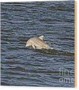 Dolphin At Sea Wood Print