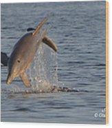 Dolphin I Mlo Wood Print