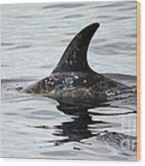 Dolphin In Monterey Wood Print