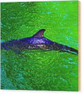 Dolphin In The Shallows Wood Print