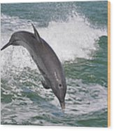 Dolphin Leap Wood Print