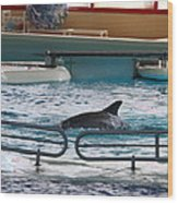 Dolphin Show - National Aquarium In Baltimore Md - 1212115 Wood Print by DC Photographer