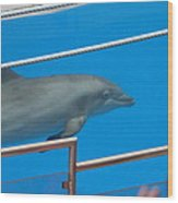 Dolphin Show - National Aquarium In Baltimore Md - 1212121 Wood Print by DC Photographer