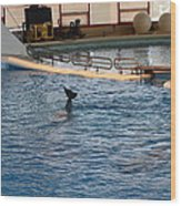 Dolphin Show - National Aquarium In Baltimore Md - 1212142 Wood Print