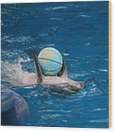 Dolphin Show - National Aquarium In Baltimore Md - 1212155 Wood Print by DC Photographer