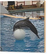 Dolphin Show - National Aquarium In Baltimore Md - 1212160 Wood Print