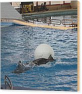 Dolphin Show - National Aquarium In Baltimore Md - 1212164 Wood Print