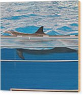 Dolphin Show - National Aquarium In Baltimore Md - 1212173 Wood Print