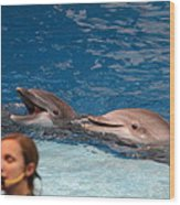 Dolphin Show - National Aquarium In Baltimore Md - 1212177 Wood Print