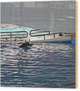 Dolphin Show - National Aquarium In Baltimore Md - 121218 Wood Print