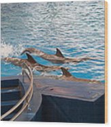 Dolphin Show - National Aquarium In Baltimore Md - 1212186 Wood Print