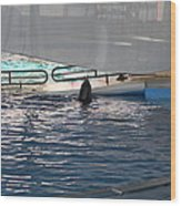 Dolphin Show - National Aquarium In Baltimore Md - 121219 Wood Print
