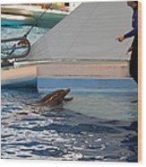 Dolphin Show - National Aquarium In Baltimore Md - 1212195 Wood Print