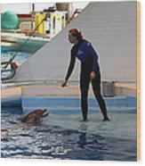 Dolphin Show - National Aquarium In Baltimore Md - 1212196 Wood Print by DC Photographer
