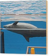 Dolphin Show - National Aquarium In Baltimore Md - 1212198 Wood Print