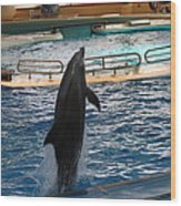 Dolphin Show - National Aquarium In Baltimore Md - 1212209 Wood Print