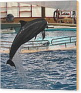 Dolphin Show - National Aquarium In Baltimore Md - 1212212 Wood Print by DC Photographer